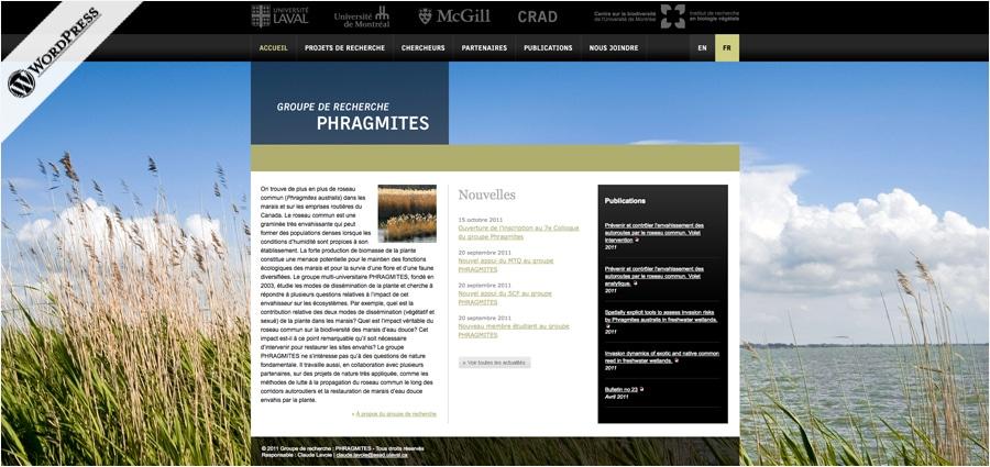 Phragmites - UL